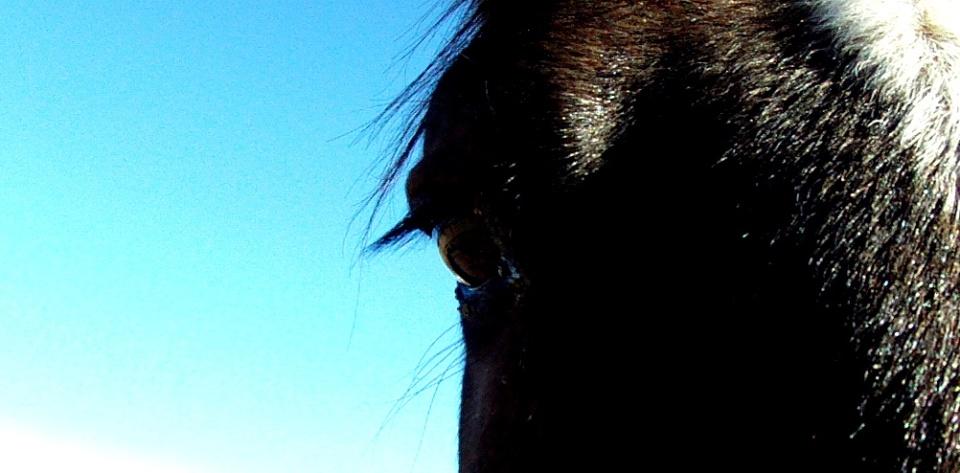Tiber @ The Horse Shelter
